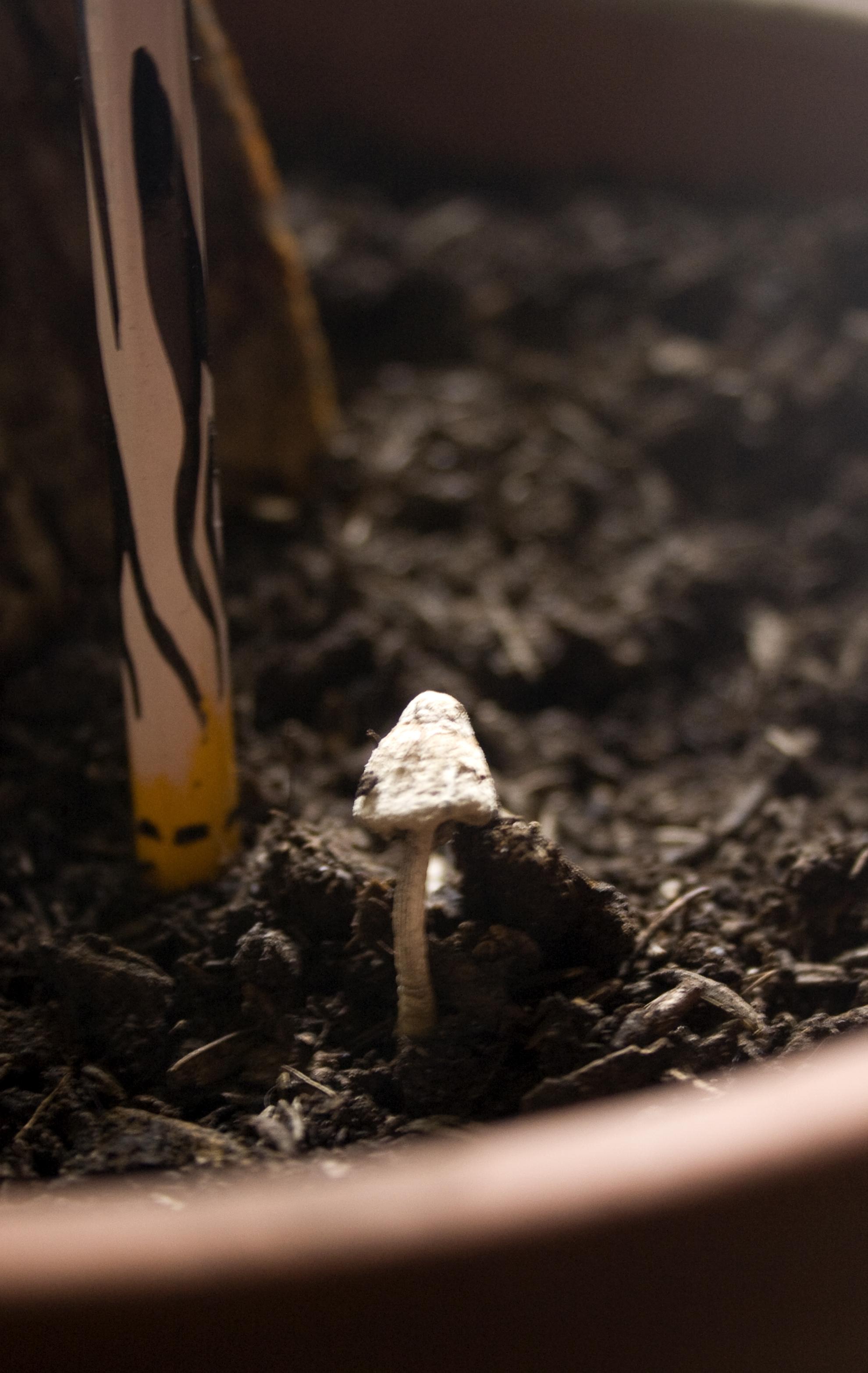 il fungo nel vaso